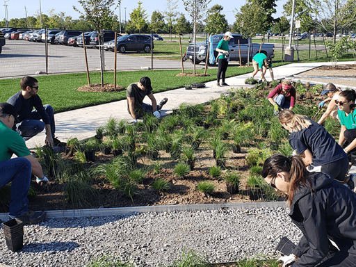 Community green space!